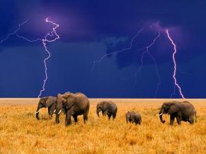 elephants-in-an-approaching-storm