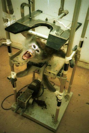 Animal-testing-4